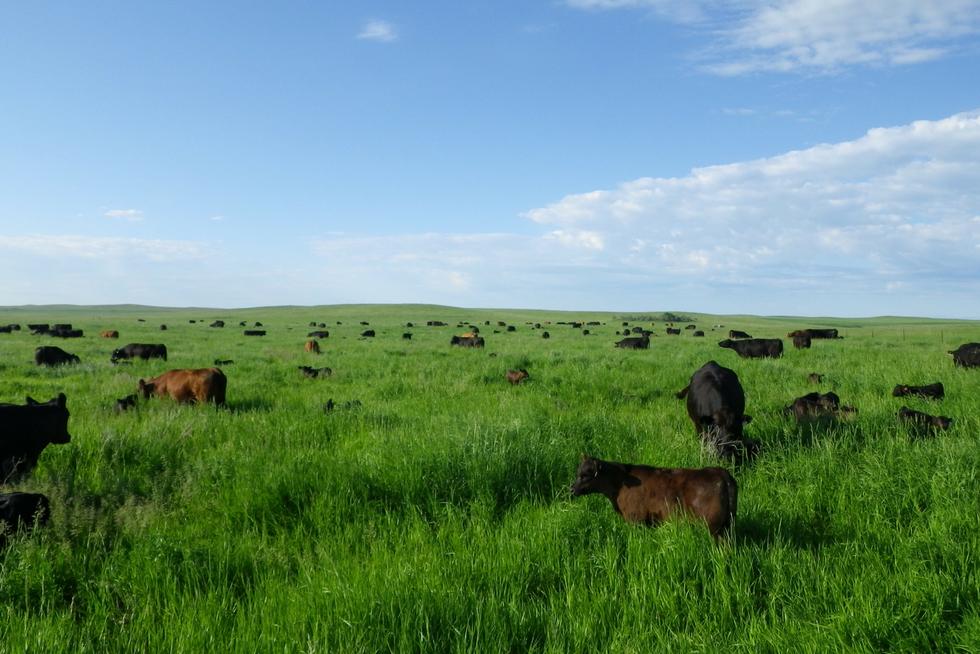 Browns Ranch - North Dakota