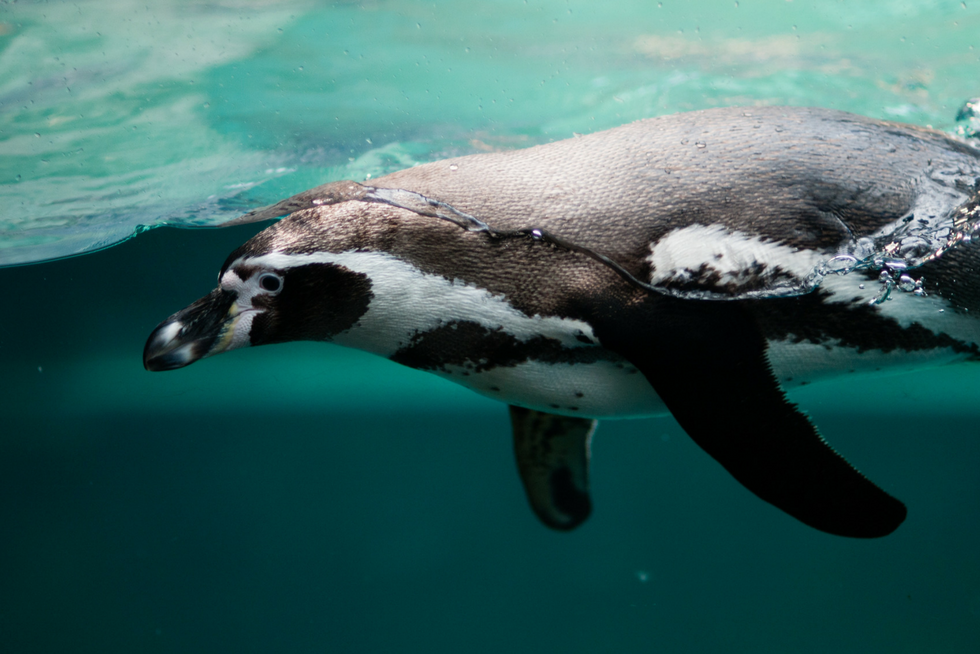 Ocean Pollution - Penguin - Rubicon