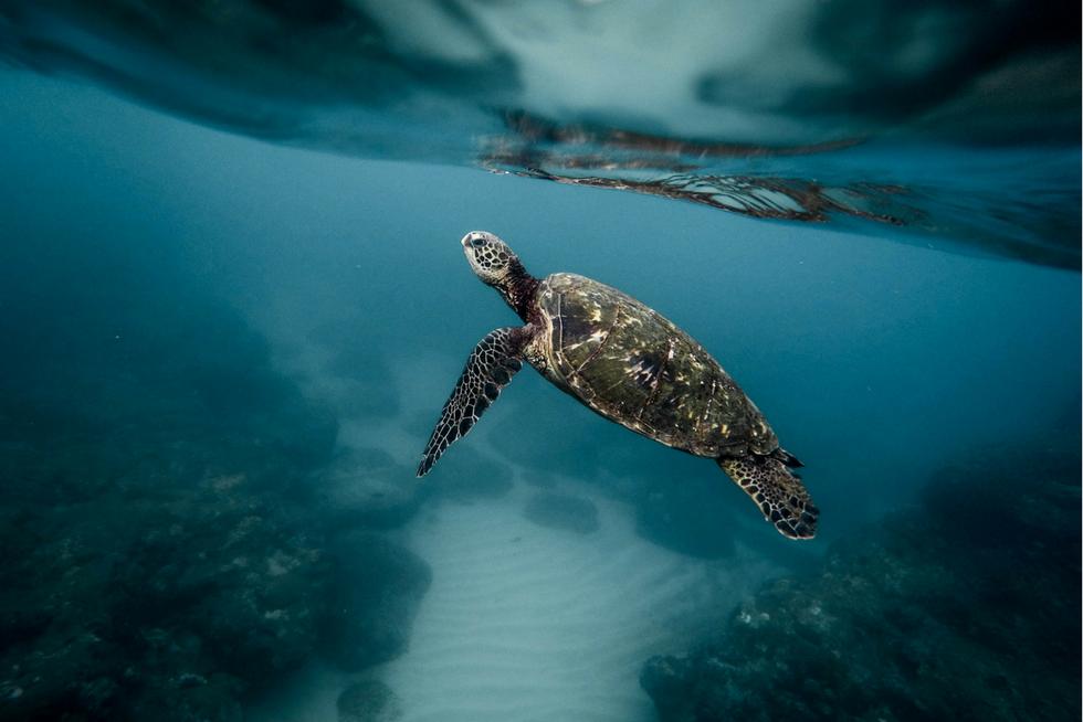 marine life, ocean pollution, last straw