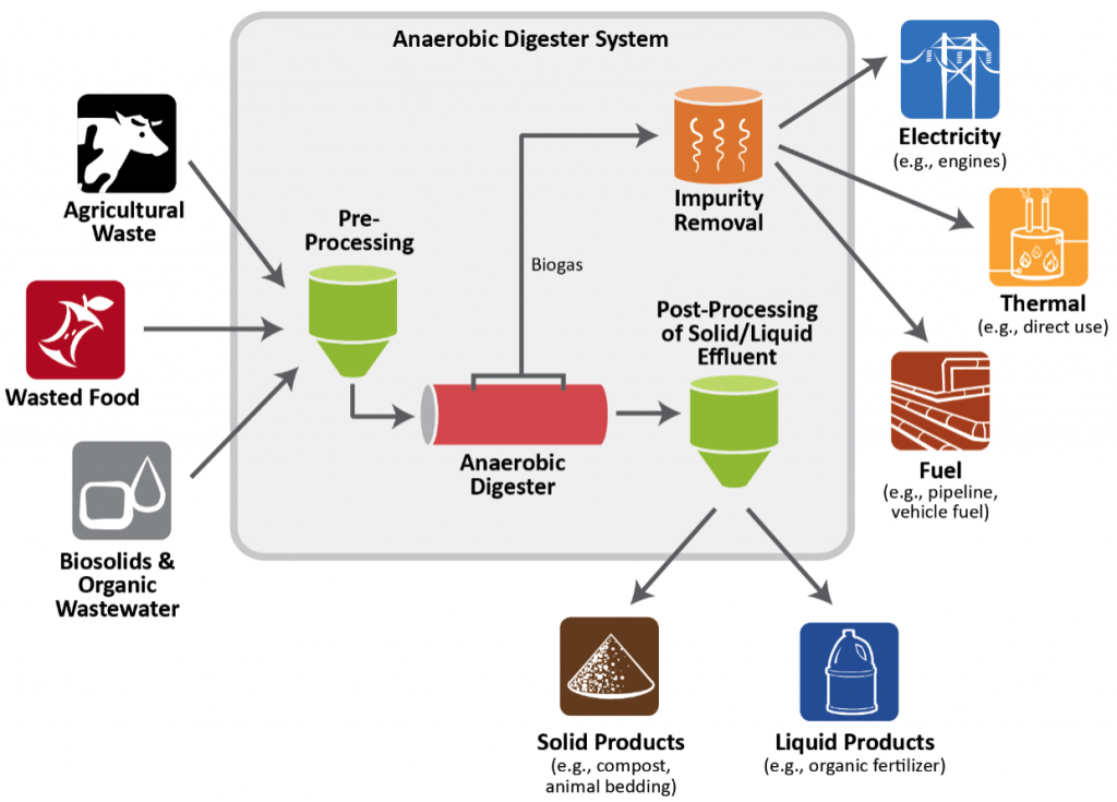 Anaerobic Digester System