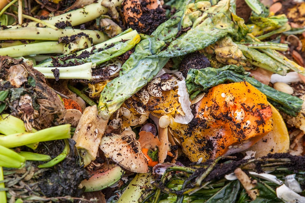 Close up of food waste
